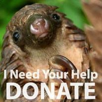 Donate to Pangolin Conservation